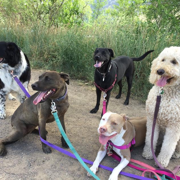 Ruffers, Kona, Poppy, Lou, Zoey