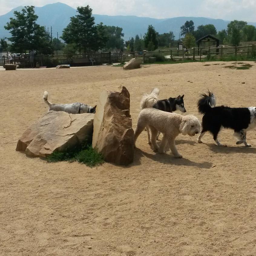 Isaac, Zoey, Ruffers, Husky friend