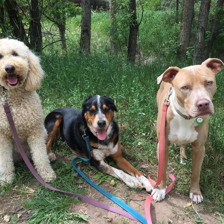 Zoey, Sputnik, Rey