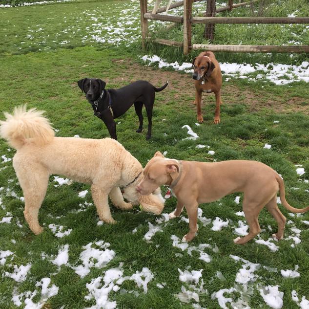 Zoey, Avo, Rey, Benny