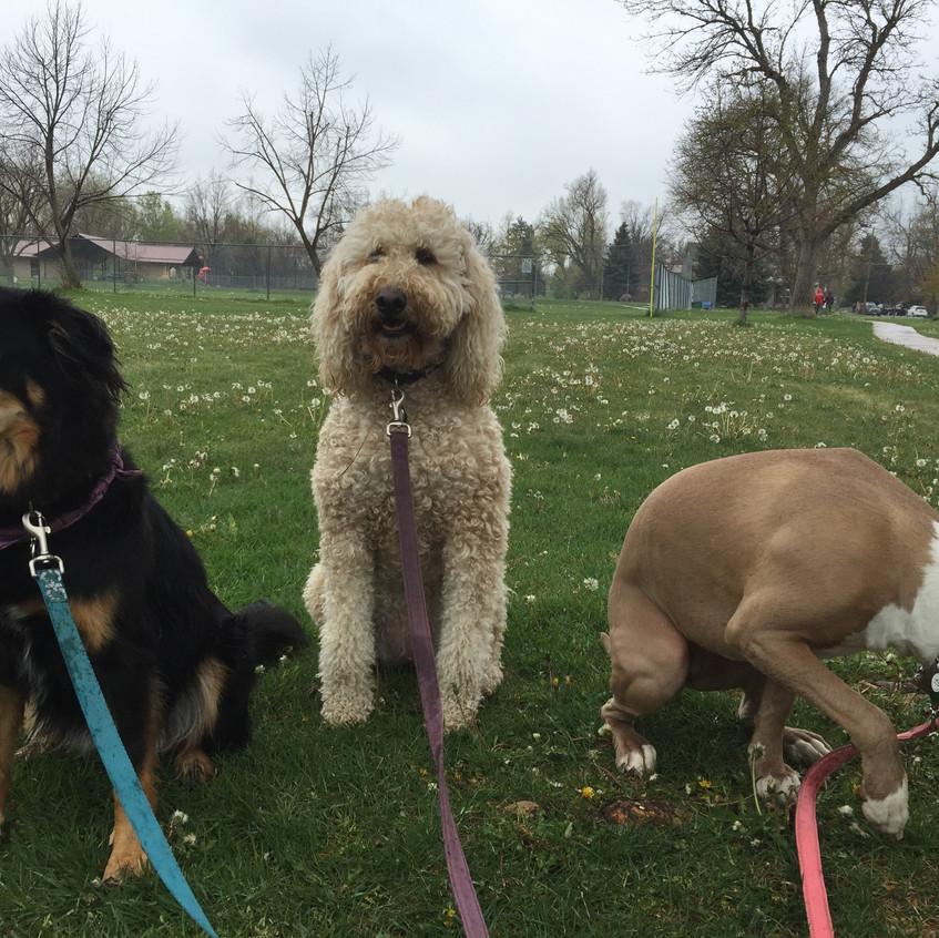 Riley, Zoey, Rey