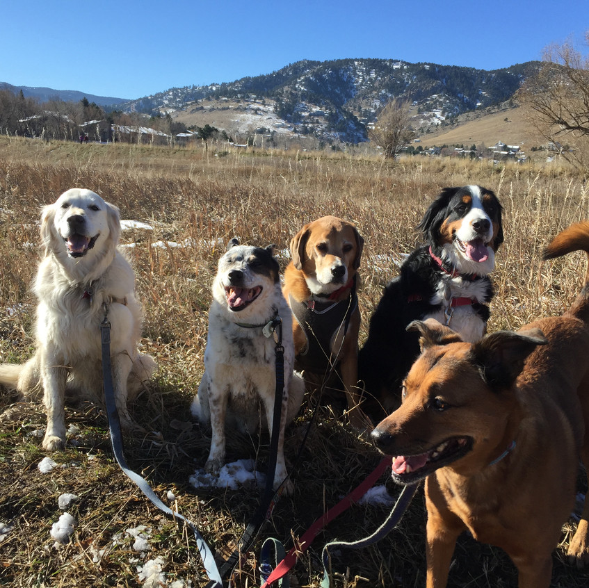 Clover, Isaac, Cooper, Monarch, Ruby