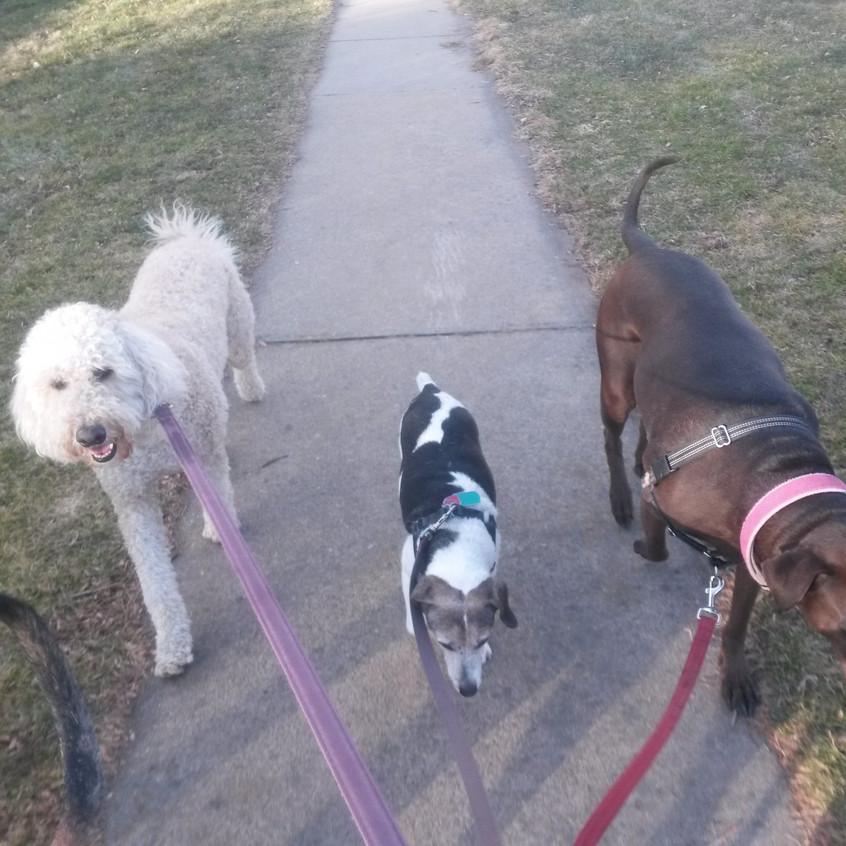Zoey, Stella, Coco