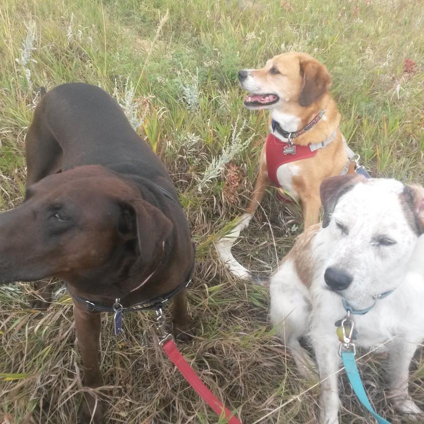 Coco, Cooper, Griff