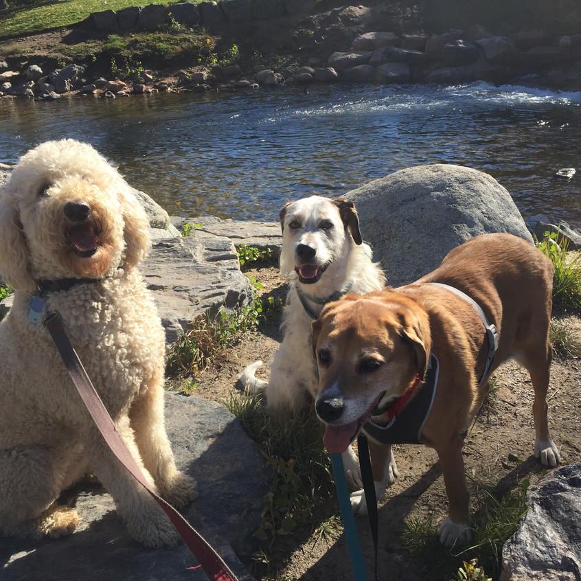 Zoey, Griff, Cooper