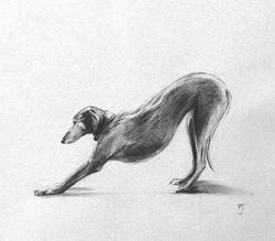 Lurcher Stretching