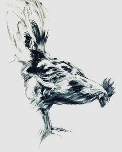 Cockerel 2020, Charcoal on paper