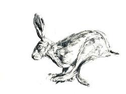 Running Hare 2020