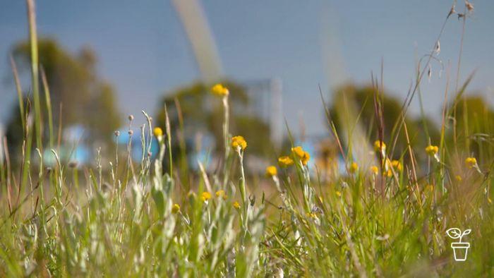 Guarding the Grasslands