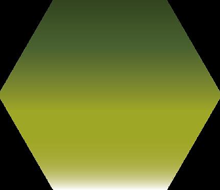 Sennelier - 813 - Vert olive - 1/2 godet