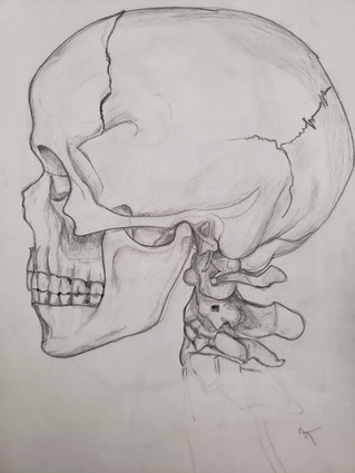 Side view Skull in Pencil
