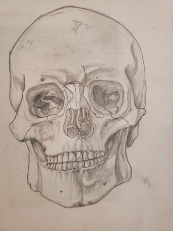 Skull Pencil Drawing