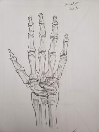 Skeleton Hand in pencil