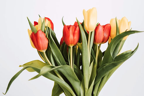 yellow%20and%20red%20tulips_edited.jpg