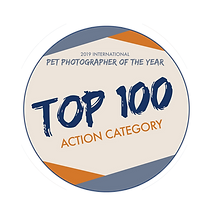 Top100Badge-Action.png