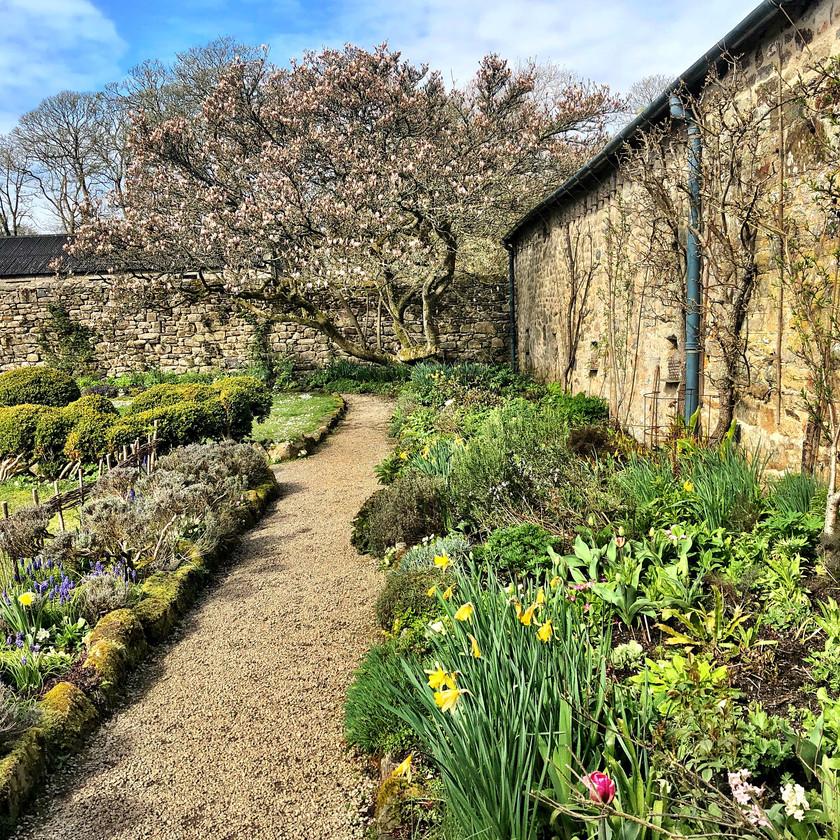 The King's Garden - an historic walled garden at Godolphin House