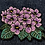 Thumbnail: Beautiful African Violets Fully Embroidered Patch