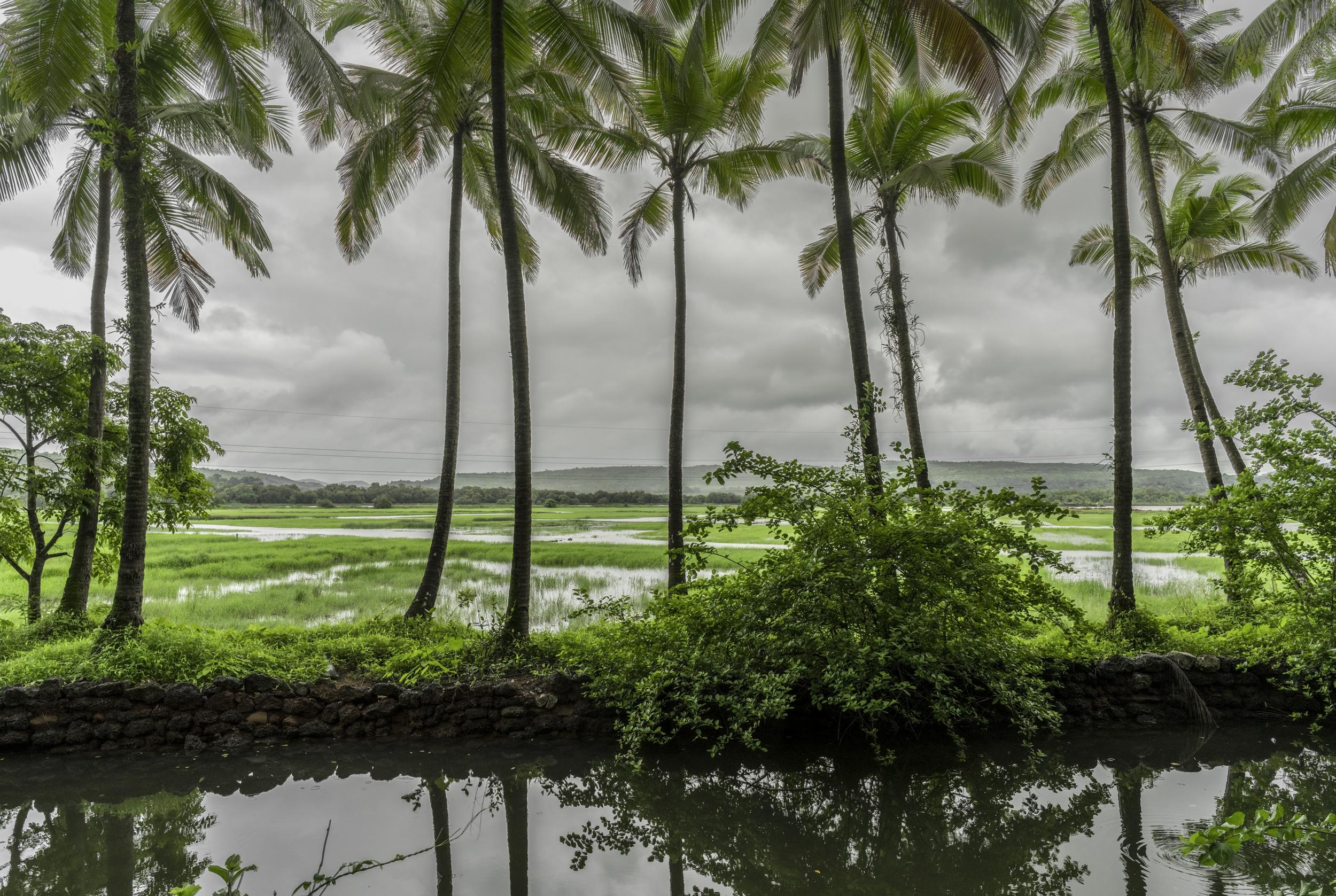 The Good Life - Goa