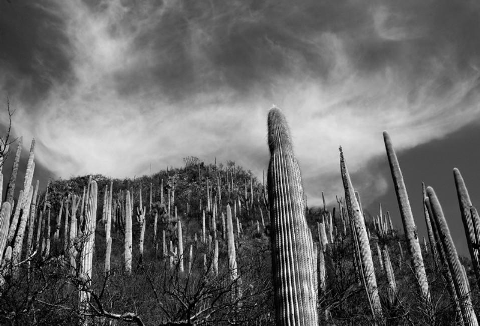 Reserva de la Biósfera Tehuacán — Cuicatlán. México, 2005. Impresión Giclée / Papel Barytado Tamaño de la Imagen: 22.7 x 34 cms. Tamaño del Papel: 29.7 x 42 cms.