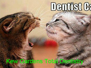 All smart random cats get their teeth checked with Dr Dentist cat