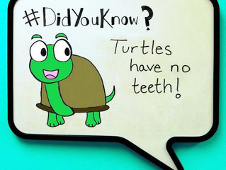 #DidYouKnow that turtles don't have any teeth? It's tough out there for a turtle dentist.