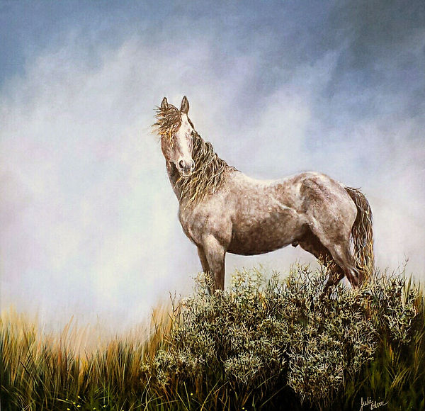 Grey Boy Wild and Free by Julie Oliver