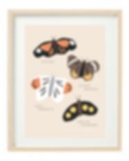 Butterflies 5x7 frame.png
