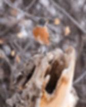jordan-spalding-CEjxgftGv5o-unsplash.jpg