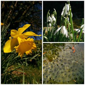 It's finally here, Springtime in garden ..