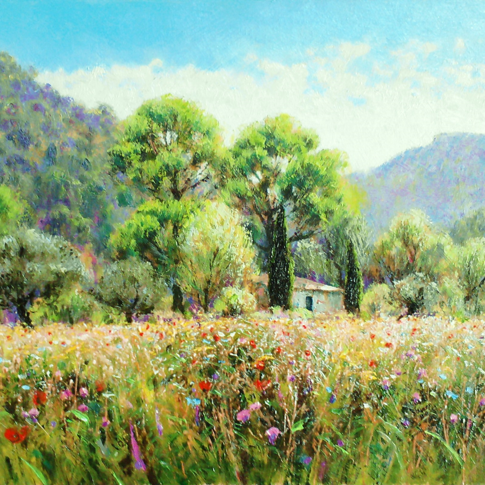 Flowerfield in the Corbieres