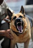 PXBY Attack dog 4.jpg