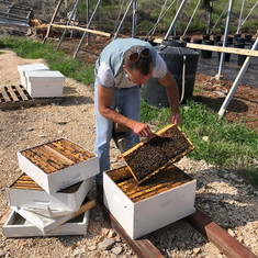 """Amichai is an """"Apiarist"""" (bee keeper) on the Jordan Valley. Recently, Bedouins stole 25% of his bee hives and caused him a major financial loss. AYC gave him a nice check to keep his business going. We're going to keep him BEEZY!!"""