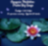 vipassana meditation.png