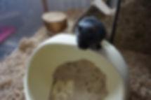 Gerbil Sand Bath