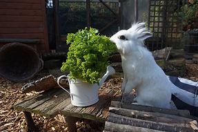 Rabbit Diet