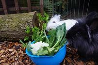 Rabbit Pair