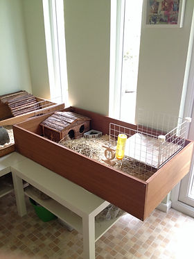 Guinea Pig Housing Ideas