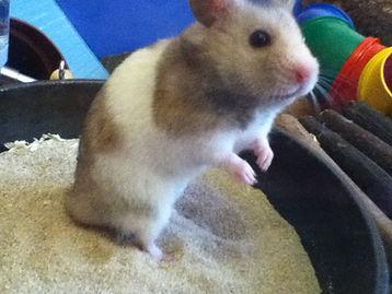 Hamster Sand Bath