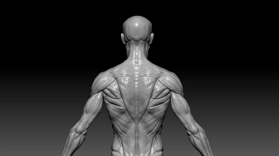 Man Anatomy/2016.02