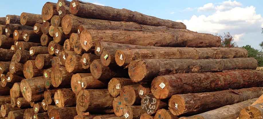 pine-wood-logs