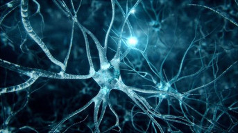 New clinical trial to slow progression of Huntington's Disease scheduled for 2022