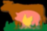 Программа по откорму свиней