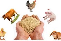 Рационы для животны