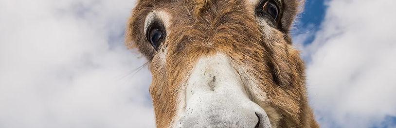 donkeyeyes.jpg
