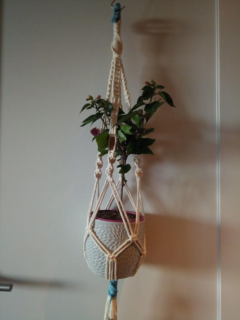 Plant Hanger 2 Colour
