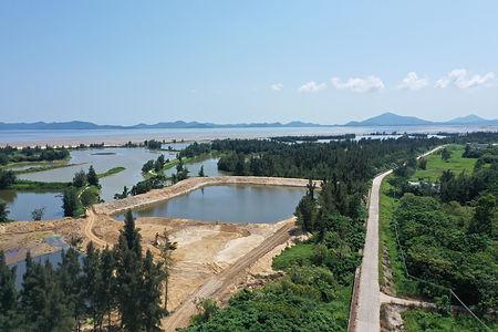 阳江红树林6.JPG