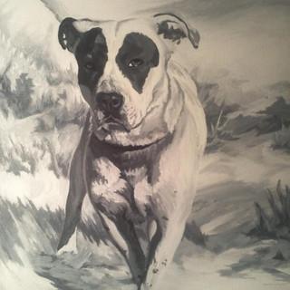 Sponsored dog portrait (Leyla)