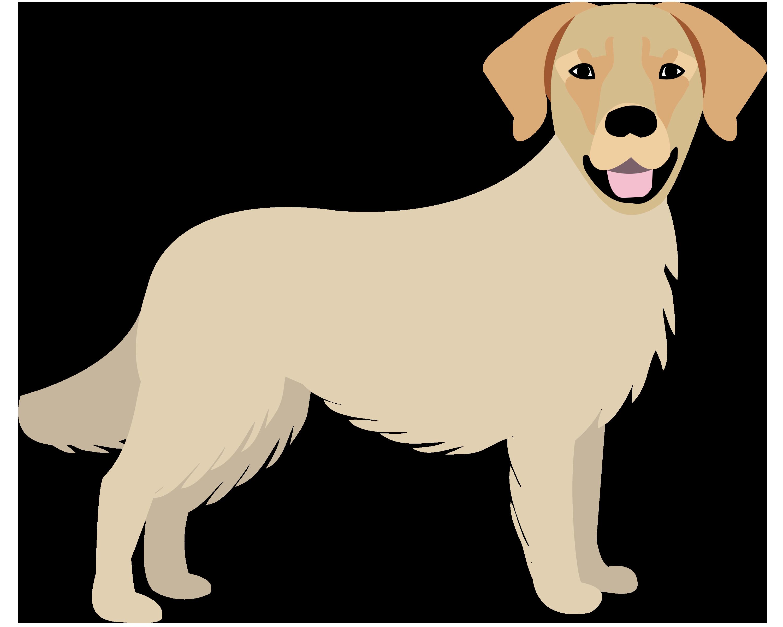 Large Dog (50-70 lbs) Grooming