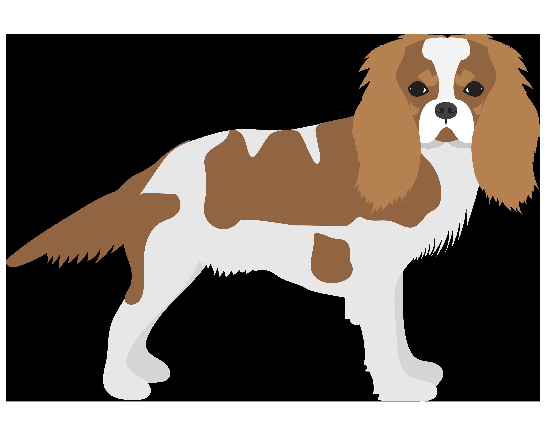 Medium Dog (30-40 lbs) Grooming