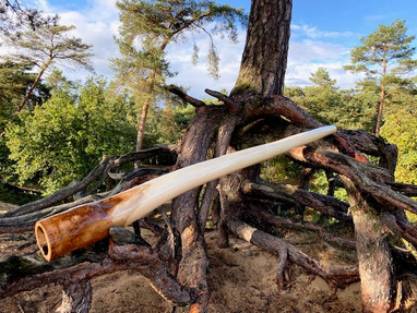 Didgeridoo Key C